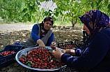 Gaziantep kirazı üreticiyi üzdü, tüketiciyi sevindirdi