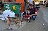 Açlıktan baygın düşen köpek yavrusuna zabıta sahip çıktı