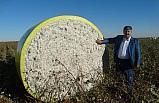 Pamuk alım fiyatları üreticiyi sevindirdi
