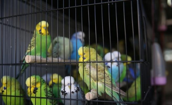 Kafes Kuşları Şanlıurfa'da Görücüye Çıktı