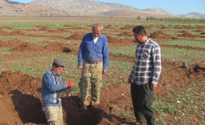 Araban'da antep fıstığı üretiminin artırılması hedefleniyor