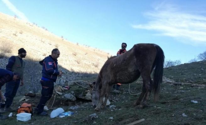 Su sarnıcına düşen at, AFAD ekiplerince kurtarıldı