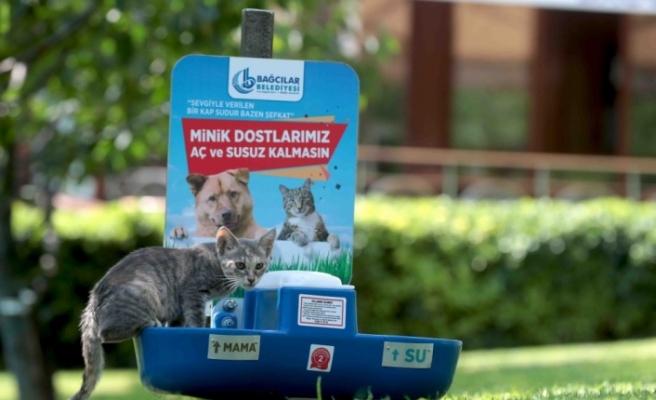 Sokak hayvanları için su ve mama hizmeti
