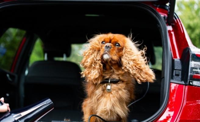 Ford, Dünya Köpek Günü'nü