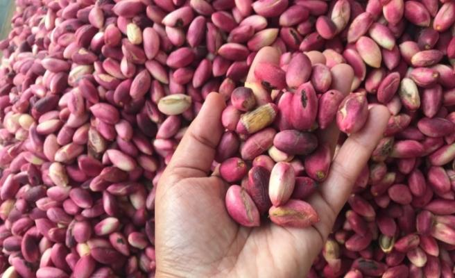 Yeni mahsul, Antep fıstığı piyasasını rahatlattı