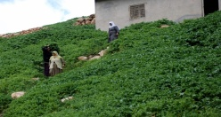 Midyat Taşlıburç Köyü Mahallesi