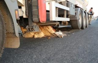 Midyat'ta Trafik kazası: 1 Ölü 1 Yaralı