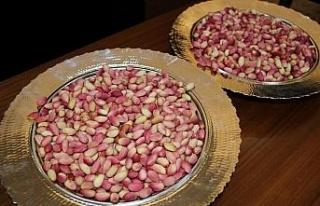 Gaziantep'te yılın ilk Antep fıstığı hasat...