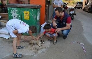 Açlıktan baygın düşen köpek yavrusuna zabıta...