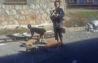 Adıyaman'da ayağı kırılan köpek tedavi edildi