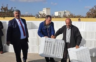 Büyükşehir Belediyesinden zeytincilere kasa