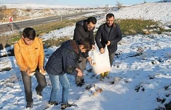 Kırkat Gölet Çevresine Hayvanlar İçin Yem Bırakıldı